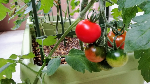 家庭菜園シーズン到来!楽しく育てて美味しく食べる