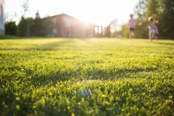 家のイメージは外構で決まる!芝生やシンボルツリーをご紹介